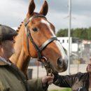 TIFF Review: Dark Horse