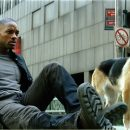 In Episode 68 of After the Ending we talk She's All That and I Am Legend