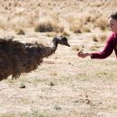 TIFF Review: Emu Runner
