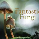 Fantastic Fungi – Louie Schwartzberg's new documentary gets a UK release date